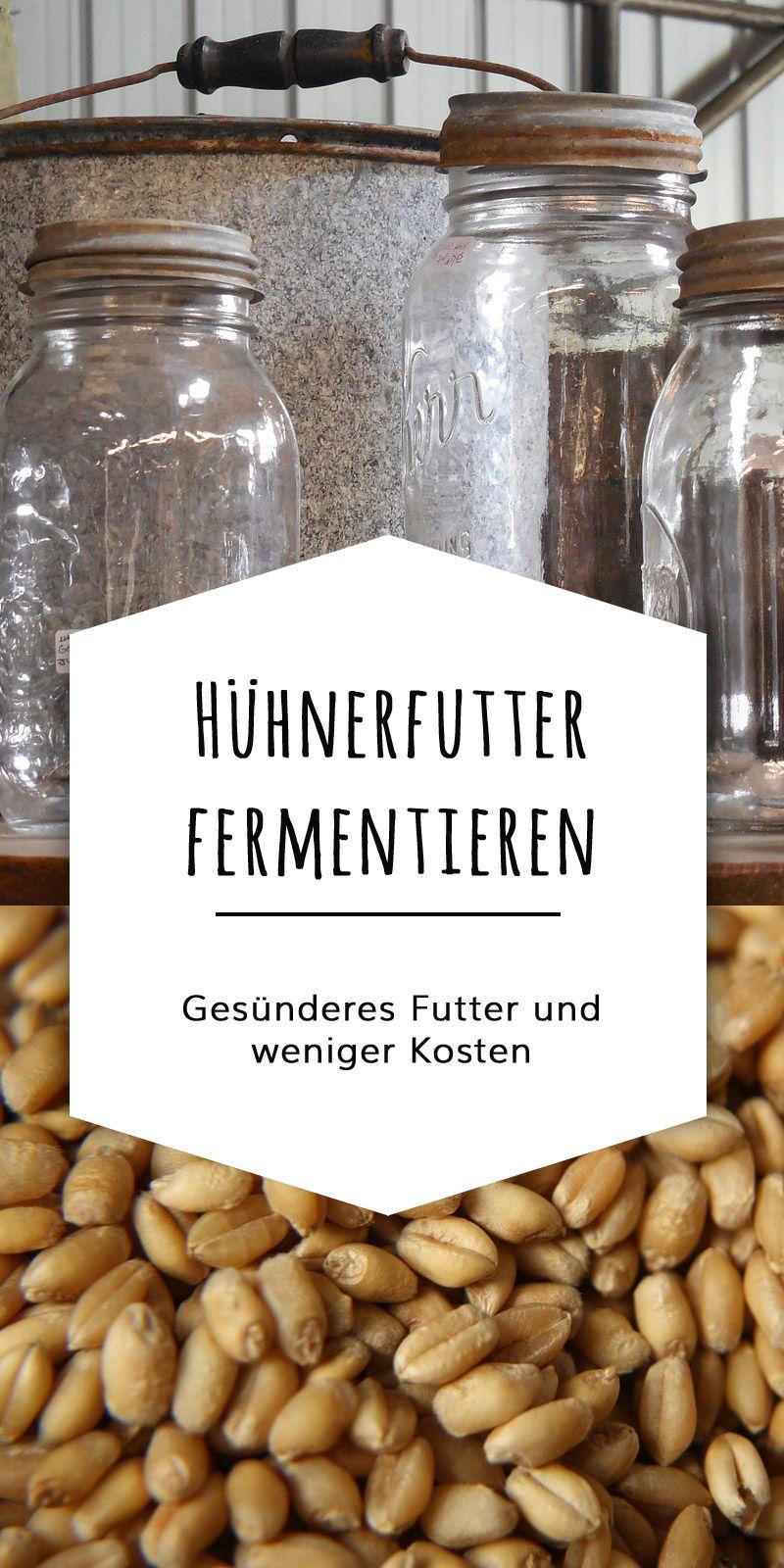 h hnerfutter fermentieren ges nderes futter in 3 tagen futtererg nzung h hner futter. Black Bedroom Furniture Sets. Home Design Ideas