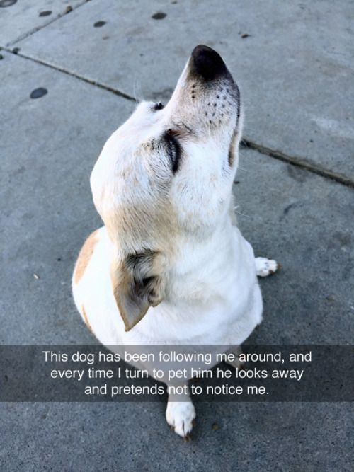 Very Funny Animal Quotes Play Hard Funny Animal Quotes And - The 30 funniest animal snapchats of all time