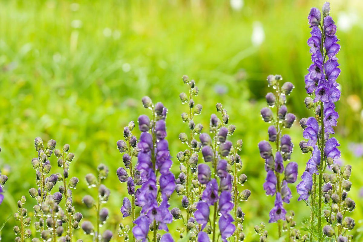 Diese Pflanzen Im Garten Sind Fur Kinder Giftig Einheimische Giftpflanzen Und Exoten Pflanzen Giftige Pflanzen Giftpflanzen
