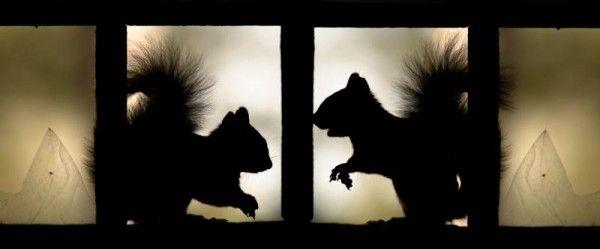 squirrels silhouette window