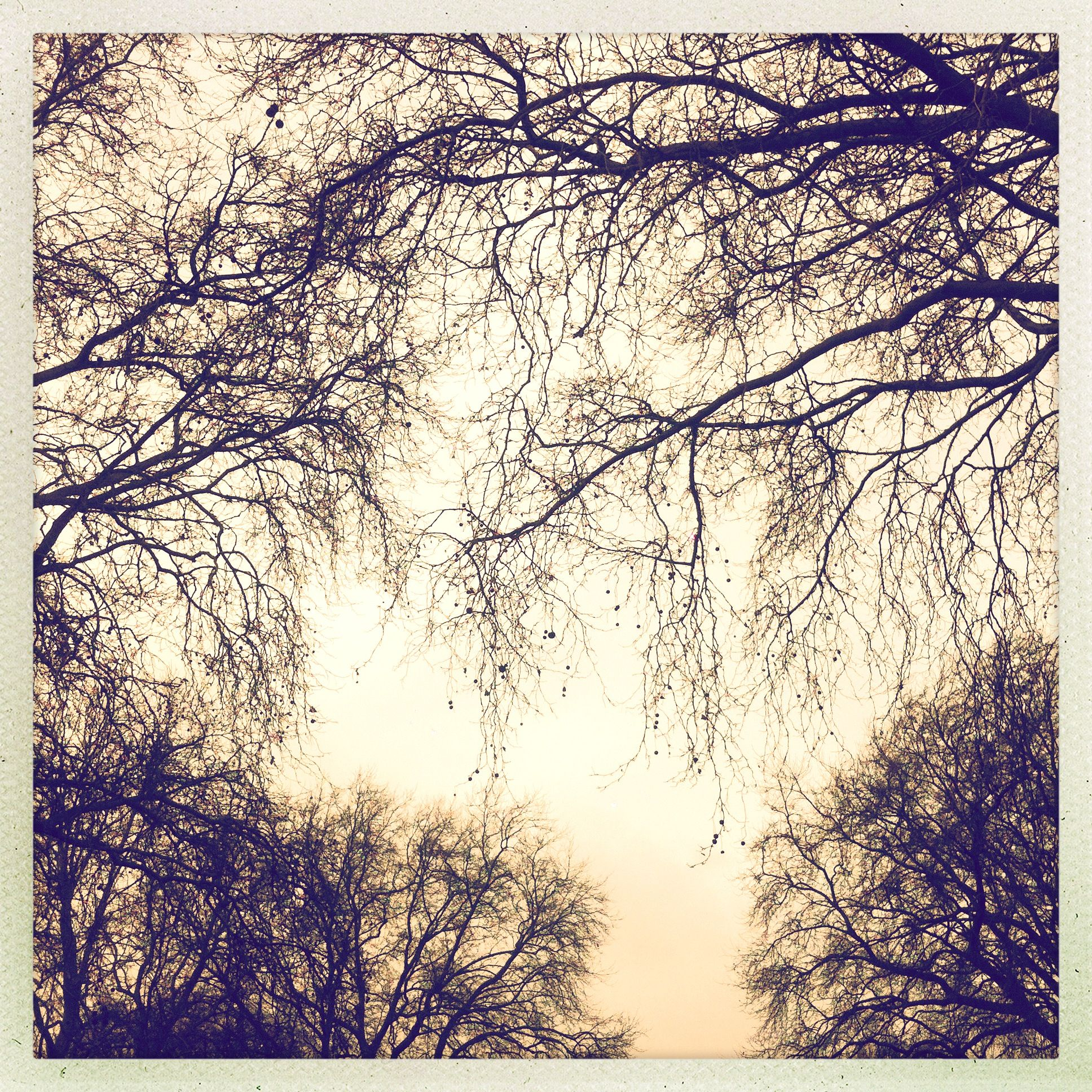 © Stefan Baker #Tree #Skies #Sky #Photography #Hipstamatic #Trees #Branches #Branch #Winter