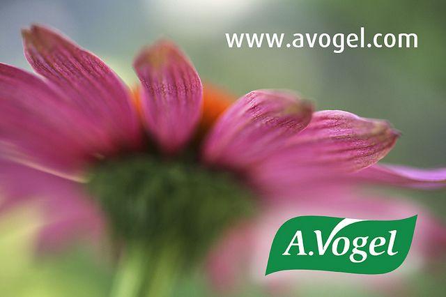 AVogel Herbal Remedies Natural And Check The Website Avogel Echinacea Flowers Simple Healthy Beauty