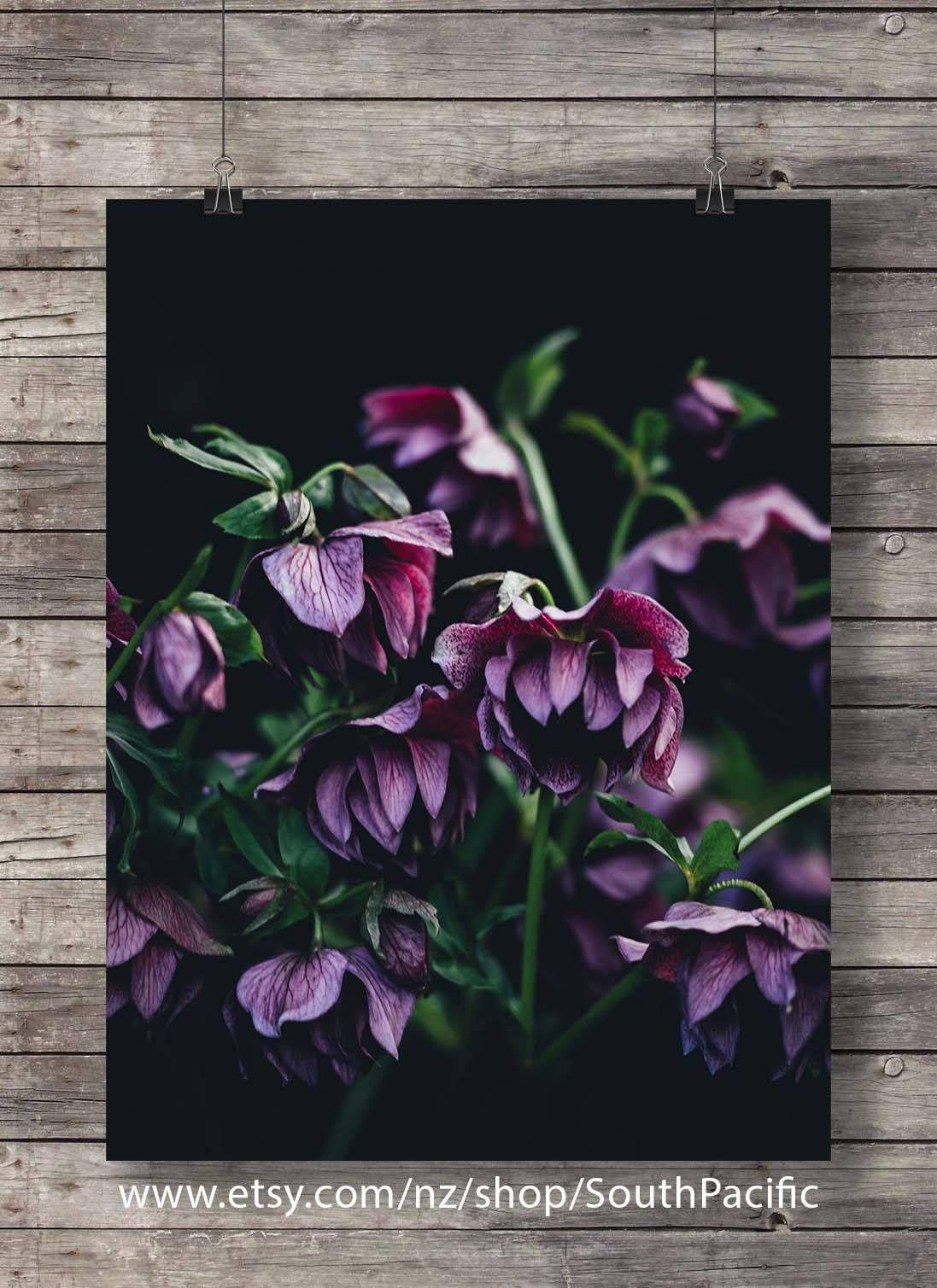 Printable art hellebore flowers photo botanical hellebore pink black white floral photography