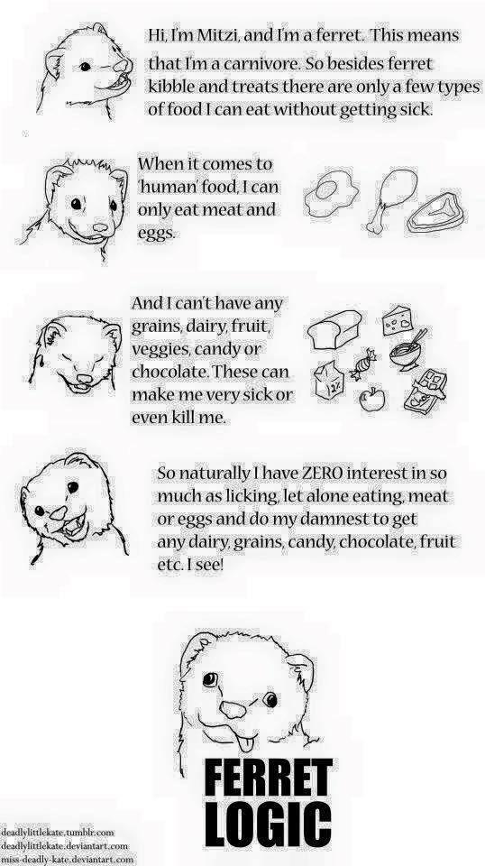 Ferret Logic Ferret Pet Ferret Human Food