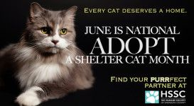 Pin on Adopt A Shelter Cat Month (June)
