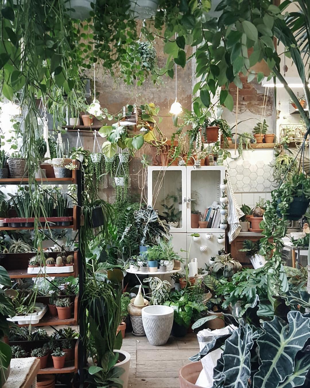 Nursery Indoor Plants Near Me: I Love It When You Call Me Big Poppy! 😛😘🌿