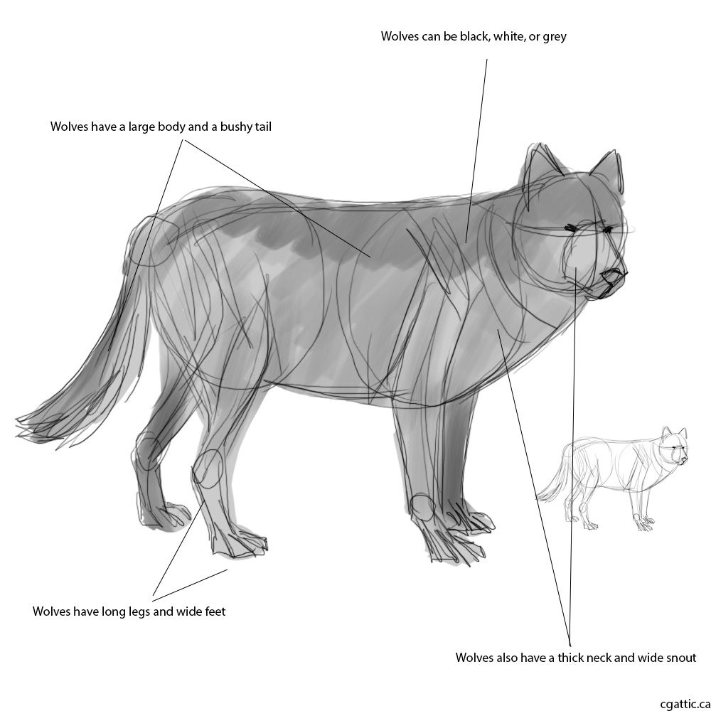 Wolf Drawing Guide: A Stepbystep Drawing Guide To Learning How To Draw A  Wolf!