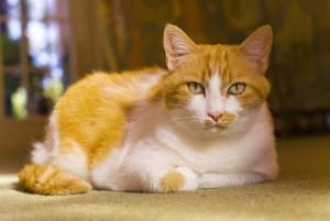 What is the Average Lifespan of a Cat?