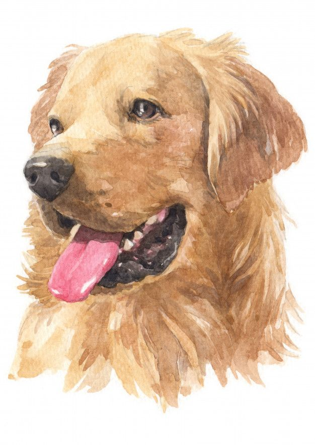Watercolor Painting Of Golden Retriever In 2020 Watercolor