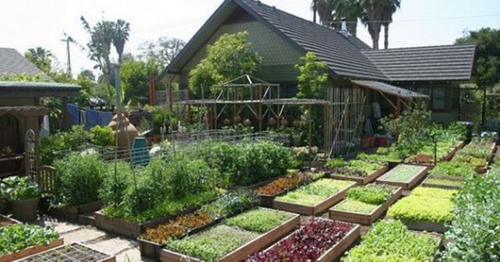 Learn How This Family Grew 6,000 Pounds Of Food On Only 1 ...