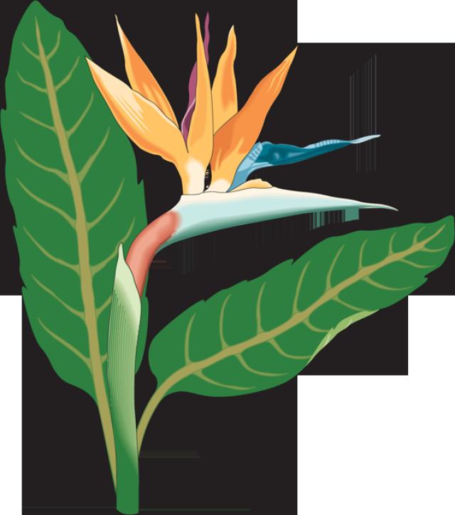 Web Development Birds Of Paradise Flower Art Art