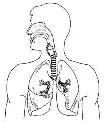 Image Result For Lung Drawing Imagenes Del Aparato Respiratorio Respiratorio Sistema Respiratorio Dibujo
