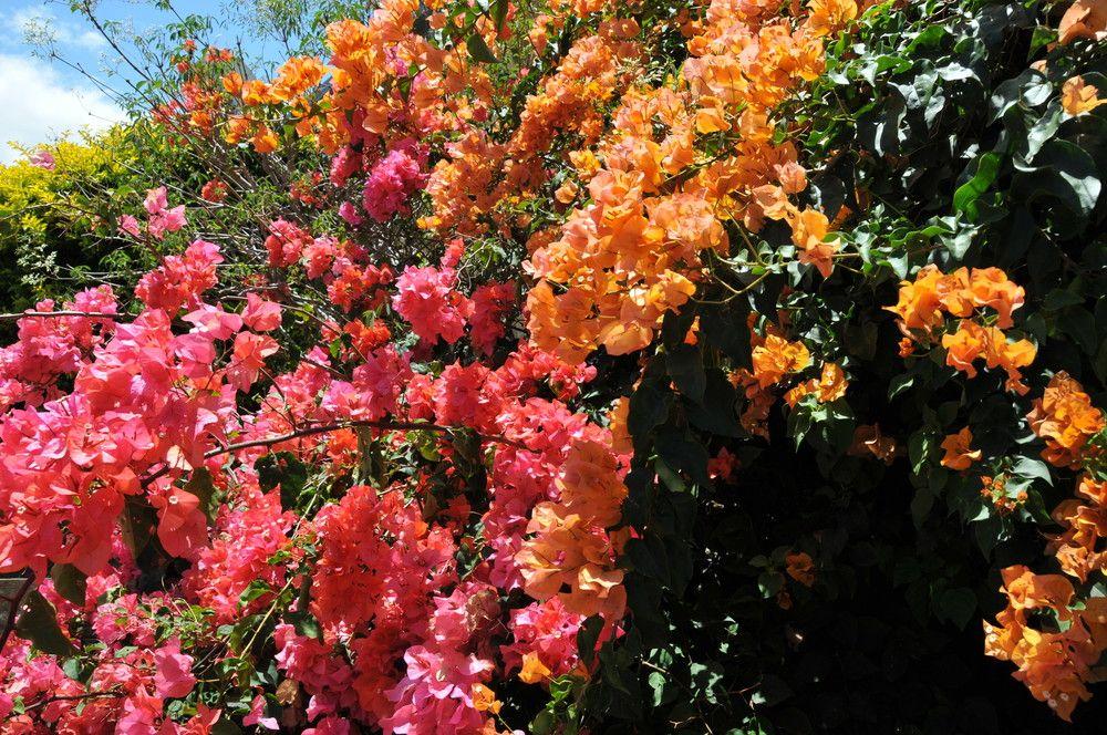 Jardin tropical nouméa   Crédit -   Flore tropicale   Pinterest ...