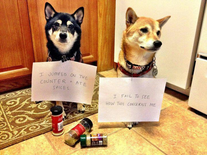 Guilty Dogs With Signs Google Search Cool Animals Pinterest - 26 funny photos of guilty dogs