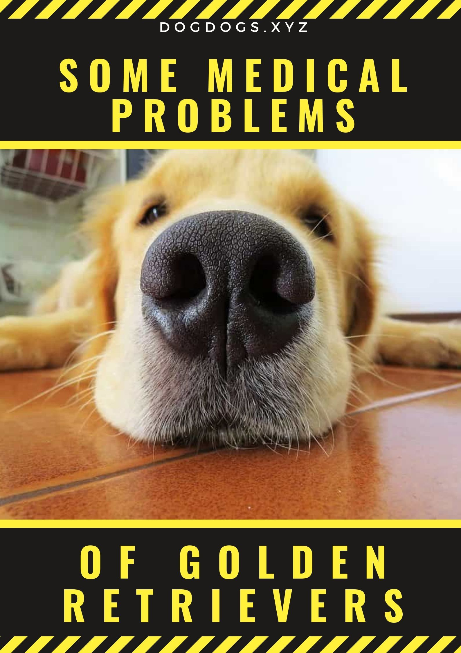 Some Medical Problems Of Golden Retrievers Dog Disease Or