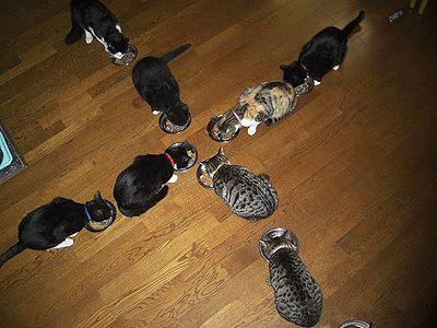ネコプラス cats plus