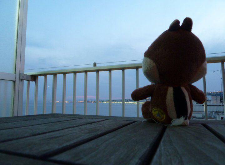 Chipmunk at the Promenade Des Anglaises
