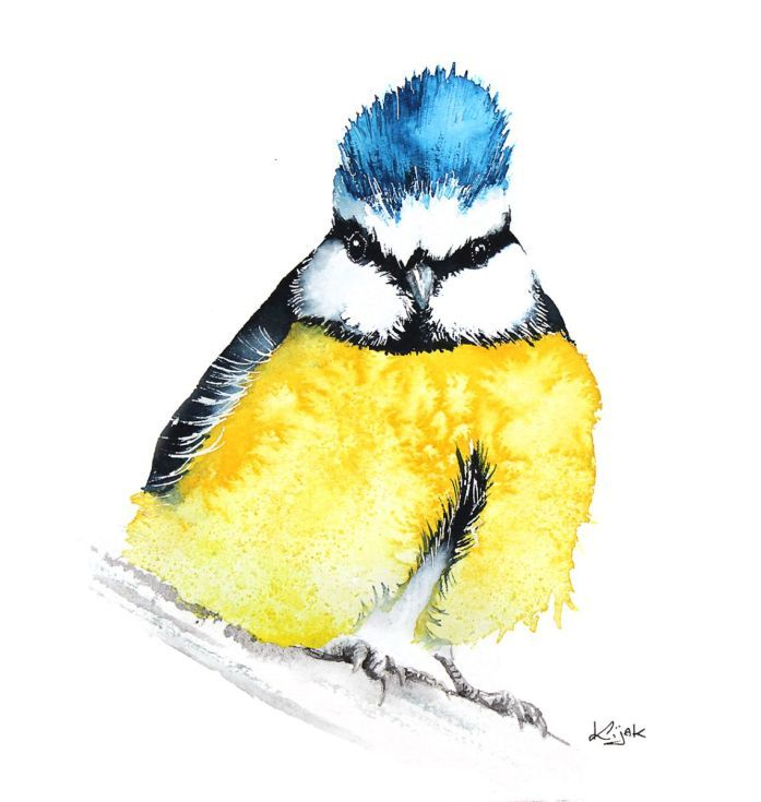 ARTFINDER:  BLUE TIT  bird, birds, animals, wild... by Karolina Kijak -  Original watercolors of Blue Tit Paper 300g  100% cotton, high quality pigments size 18x18cm  Follow me on facebook: https://www.facebook.com/kijakwater...