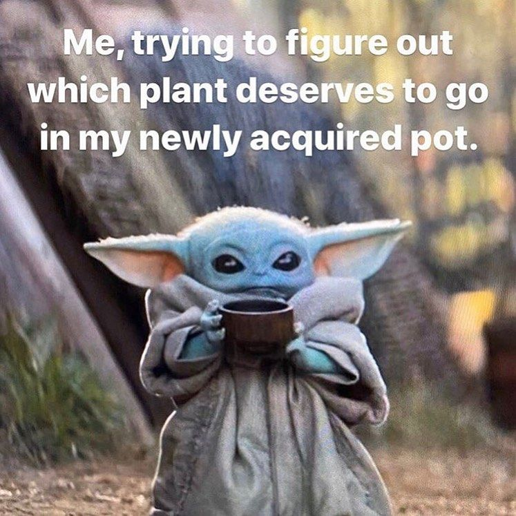 Philomemedron On Instagram Decide You Must Submitted By Jrlefrancois Dumb Plantmins Kevinsgreenpets Em Yoda Funny Stupid Funny Memes Yoda Meme