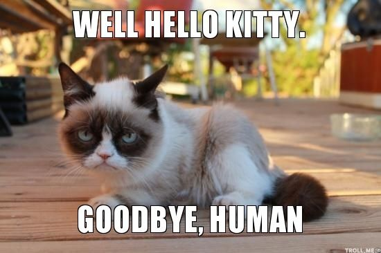 Funny Cat Meme Generator : Grumpy cat pictures with captions kitty. goodbye human