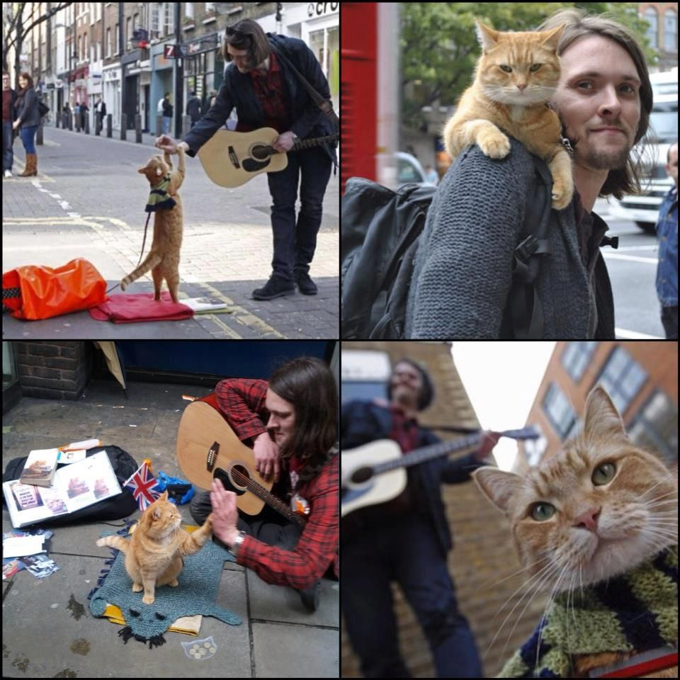 James Bowen & Bob.  'Street Cat Bob' is probably the most famous cat in London