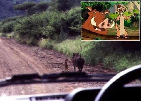 So they ARE real!!!  *mind blown.