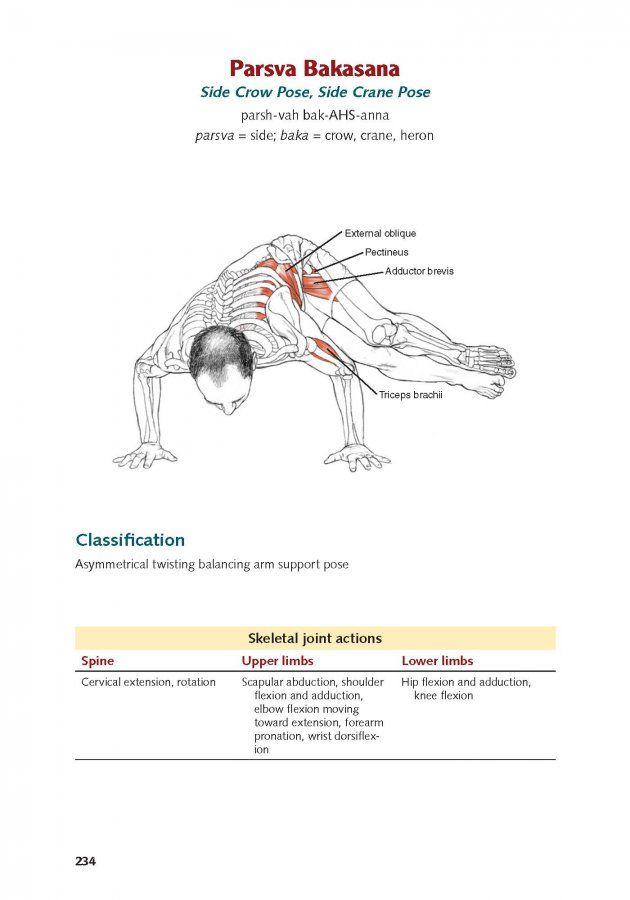 imagen de parsva bakasana con musculatura | Anatomía para el ...
