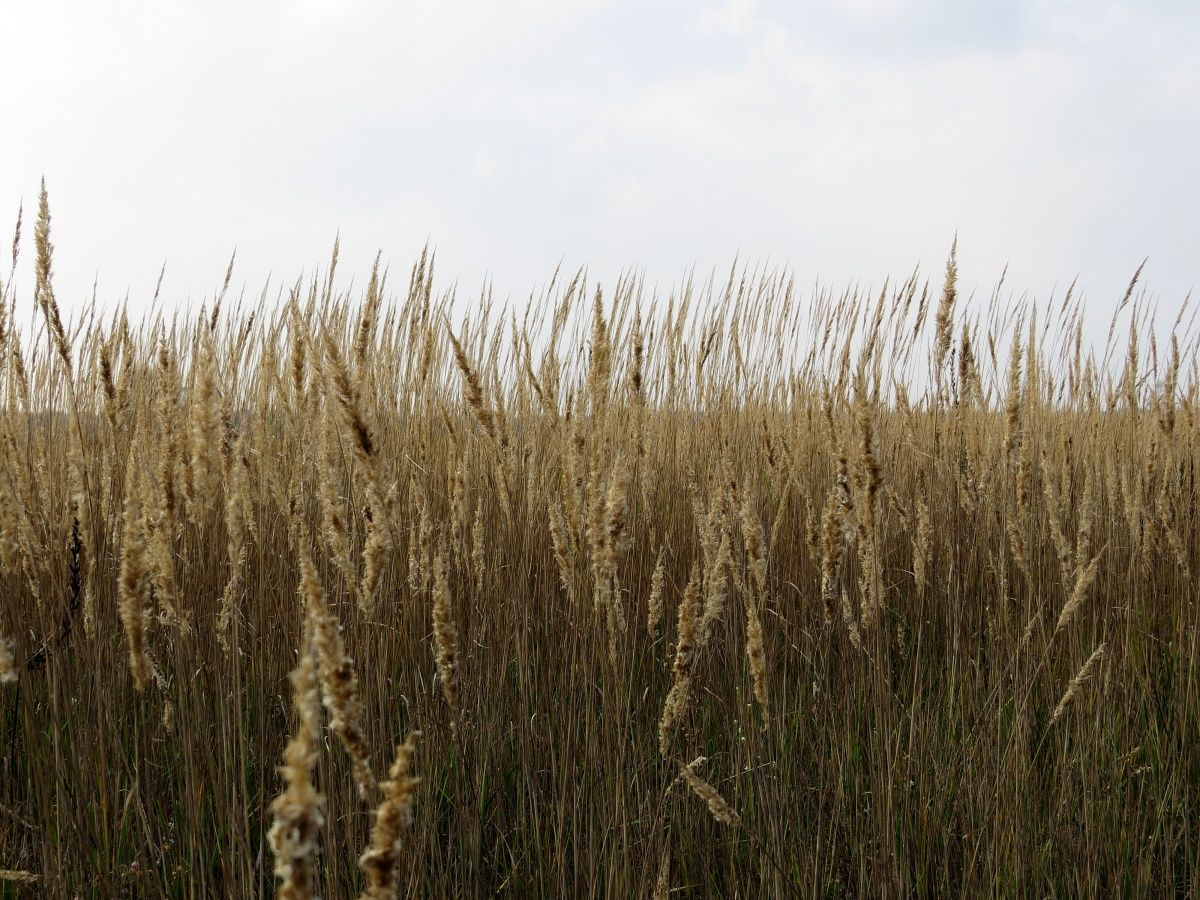 Tall Grass Texture | LA l visualization source | Pinterest