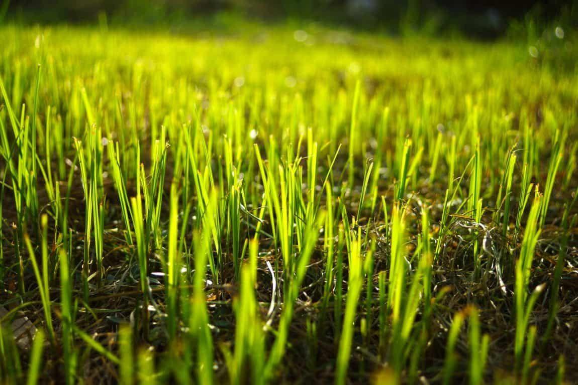 fall seeding tips Aerate lawn, Lawn fertilizer, Seeding lawn
