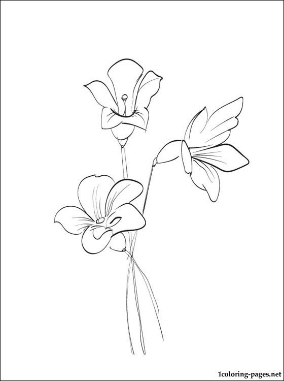 Freesia Coloring Page Coloring Pages Watercolor Flowers