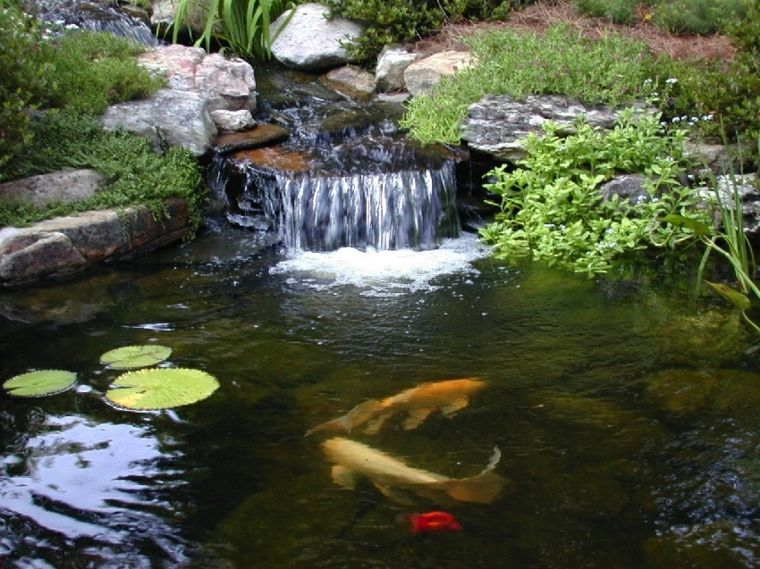 Estanques koi fuente de cascada jard n pinterest for Koi fish farm near me