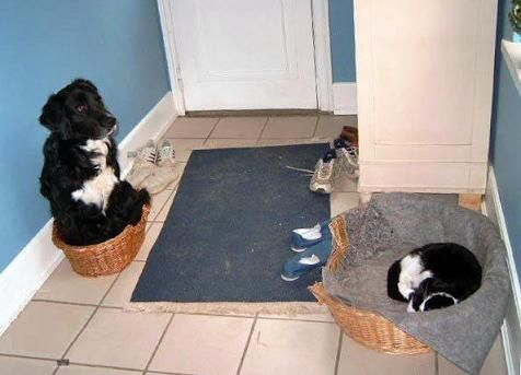 Pies i kot w różnych koszykach pomieszani