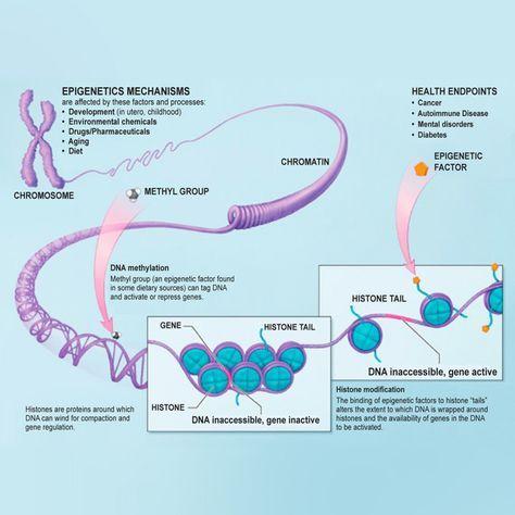 You Can Change Your Dna Epigenetics Dna Molecular Biology