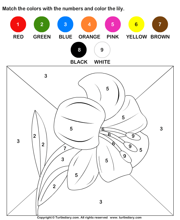 Worksheet. Download and print Turtle Diarys Color by Matching with Numbers