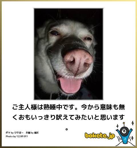 画像で大喜利 犬の写真でボケてみた15選 犬のジョーク 犬の写真 動物