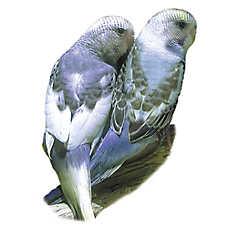 Pet Birds For Sale Finches Parakeets Conures More Petsmart