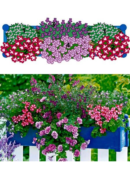 balkonblumen fantasievoll kombiniert window box flowers gardens and plants. Black Bedroom Furniture Sets. Home Design Ideas