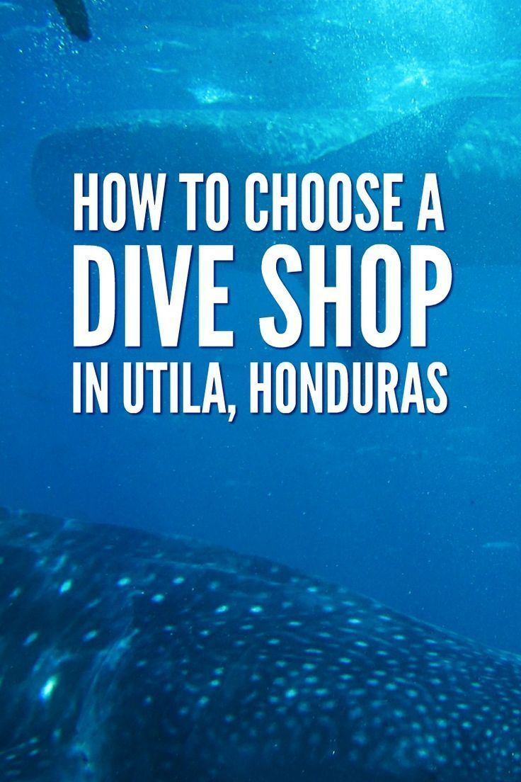 Learn How To Choose A Dive Shop In Utila. Before You Sign