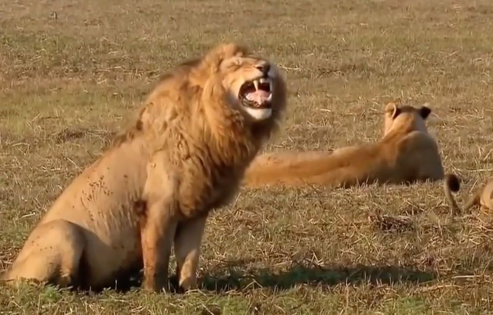 Als je een rotdag hebt, bekijk dan deze video van 47 seconden