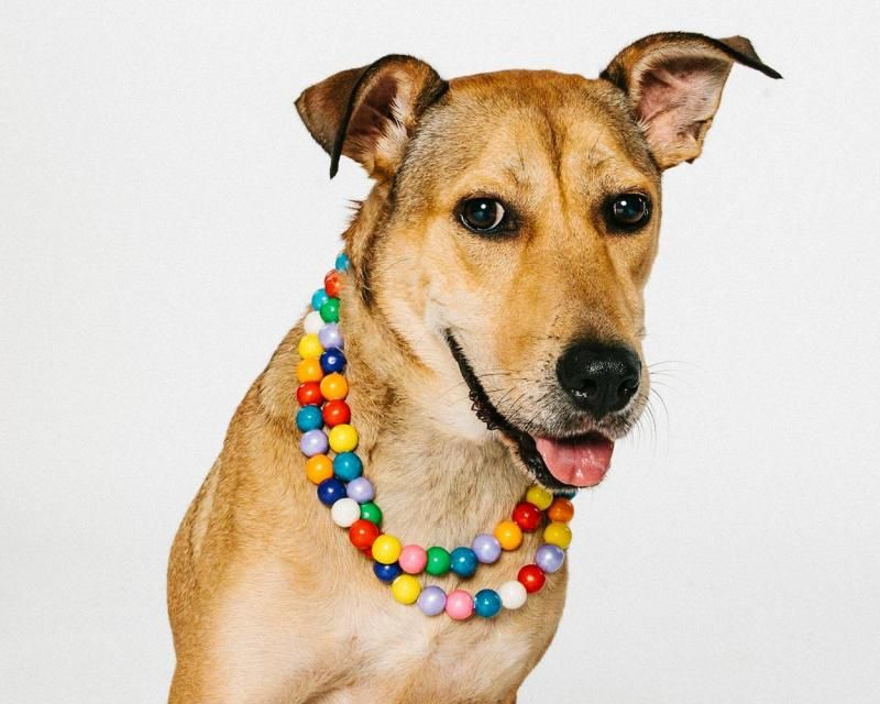 Adopt Kiki On Will You Adopt Me Signed Rescue Pet Save A Dog