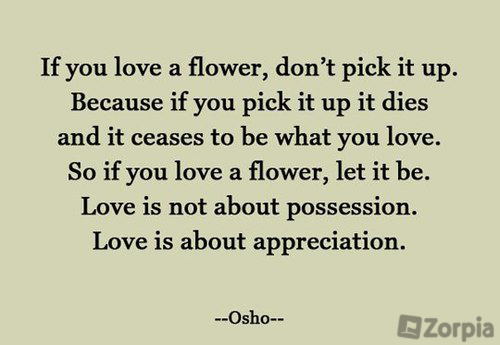 Love Is Not About Possession But Appreciation Zorpia Love