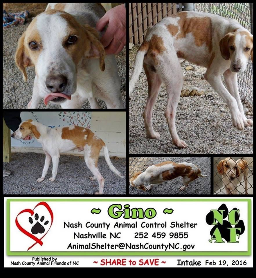 Pin on Hounds at Other Shelters