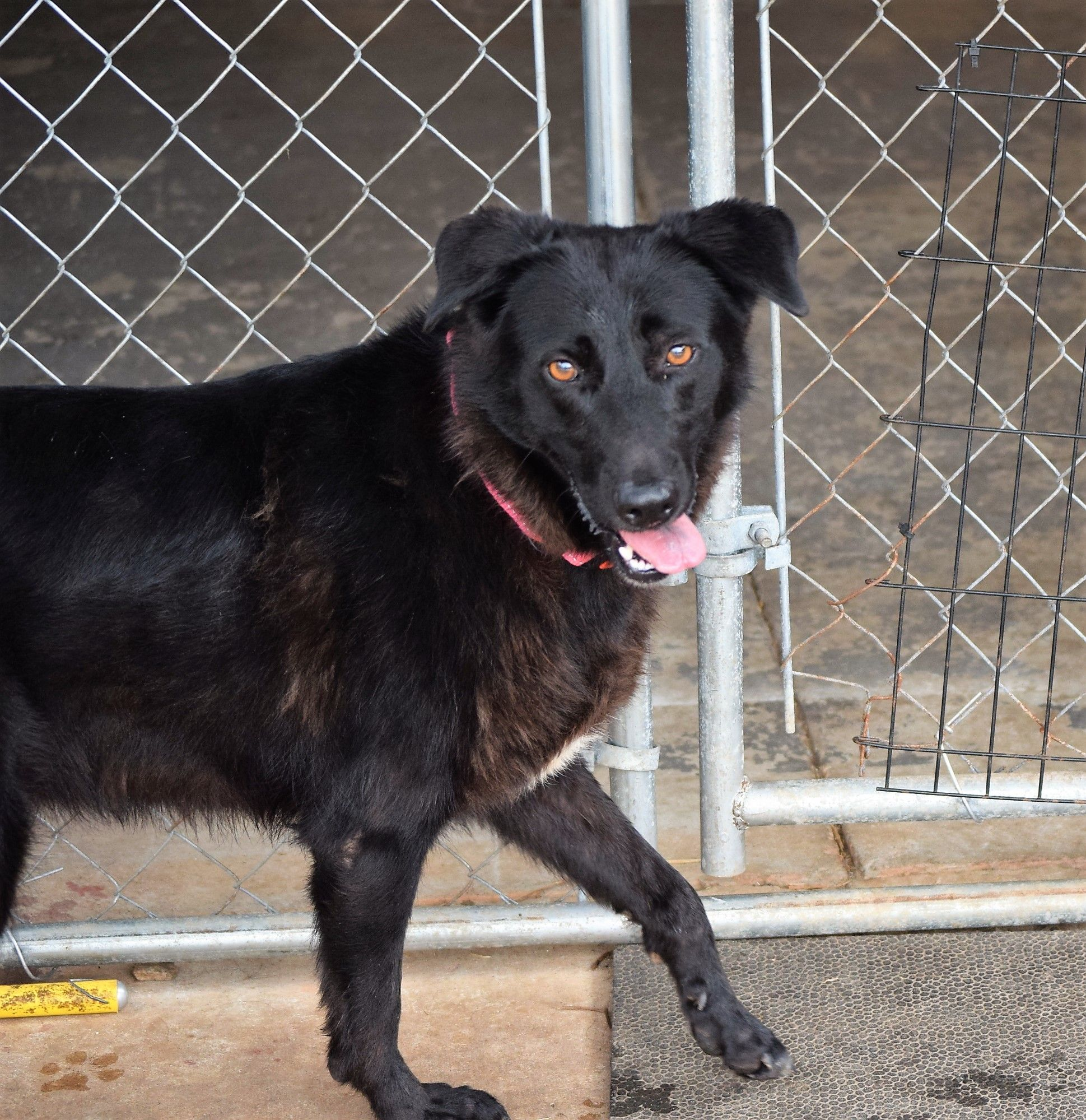 Adopt Rosie On Dogs Puppies Dogs Pet Adoption