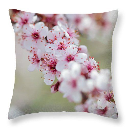 Somei Yoshino Throw Pillow featuring the photograph Cherry Valley by Becca Buecher