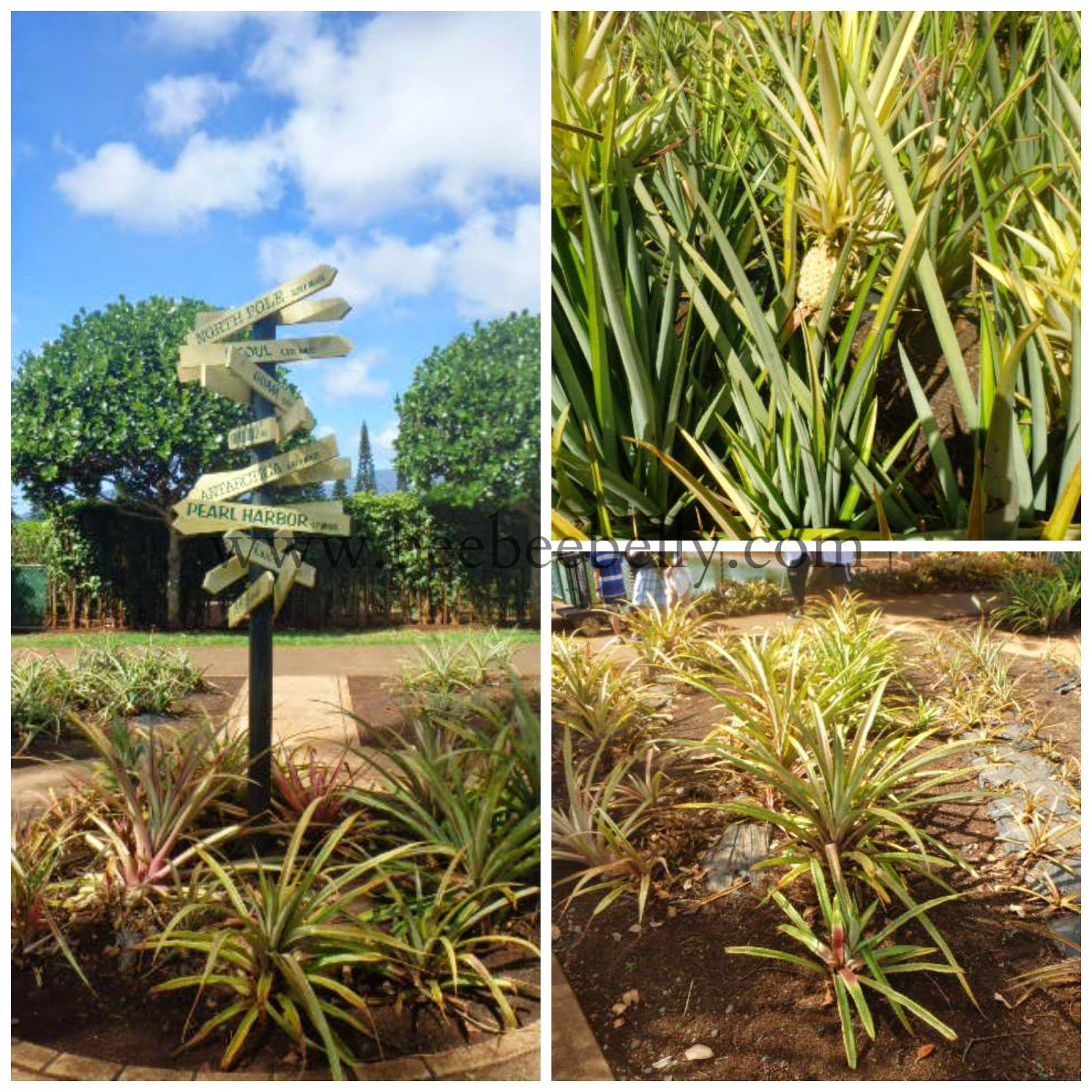 Dole Plantation | Wahiawa, Hawaii
