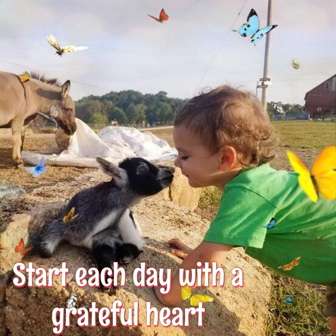 Start Each Day With A Grateful Heart Work With Animals Pig