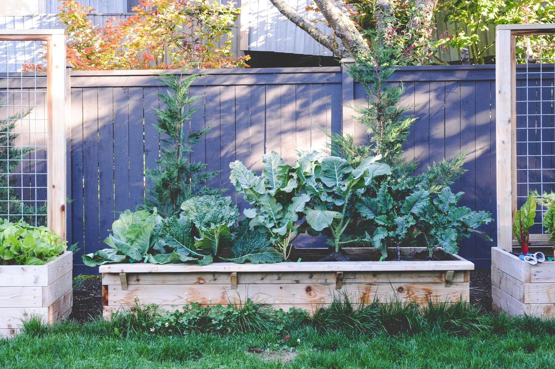 Pin by Laurie Ellis Bruckmann on garden | Pinterest | Edible garden ...