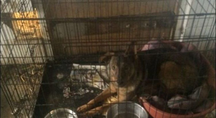 Petition · Slough Council : Save the Forgotten Animals of