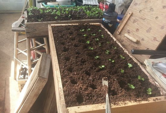 Indoor Greenhouse Diy Seed Starting
