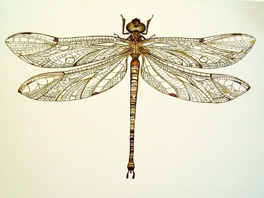 Pinned dragonfly by arboris silvestre